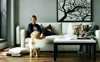 Small Apartment Ideas: Eliminating Pet Odors in the Home