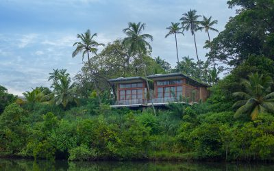 Minimalist Rentals and Forested Hideaways for Your Next Vacay