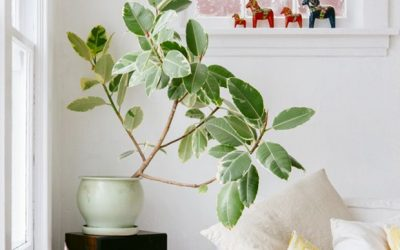 10 Microapartment Houseplants That Won't Die on You