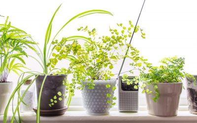 10 Low Light Houseplants to Brighten Your Tiny Apartment