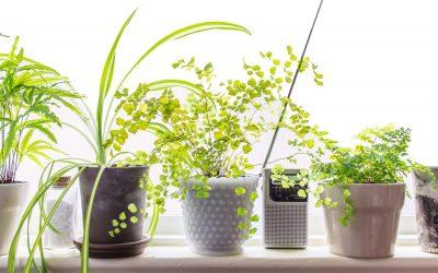 10 Low Light Houseplants to Brighten Your Tiny Apartment