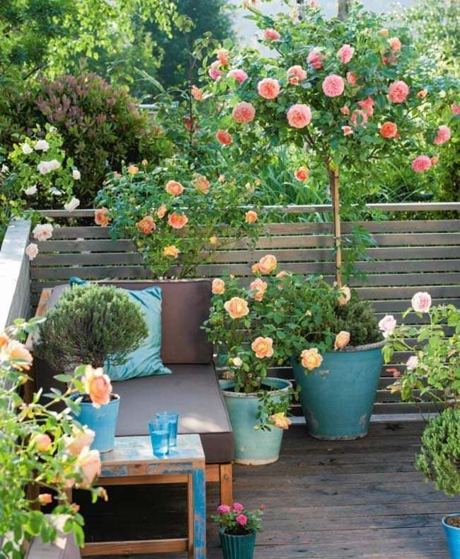 Container Garden Ideas: Small Apartment Ideas