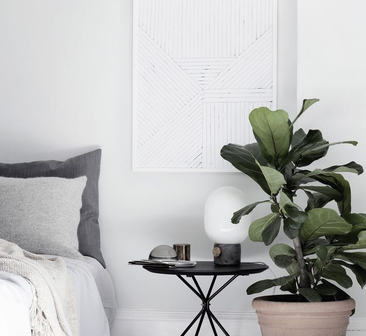 Decorating with Plants: How to Add a Pop of Green in a Minimalist House
