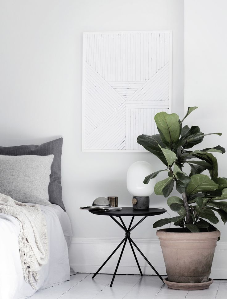 12 Plants For Your Bedroom ...