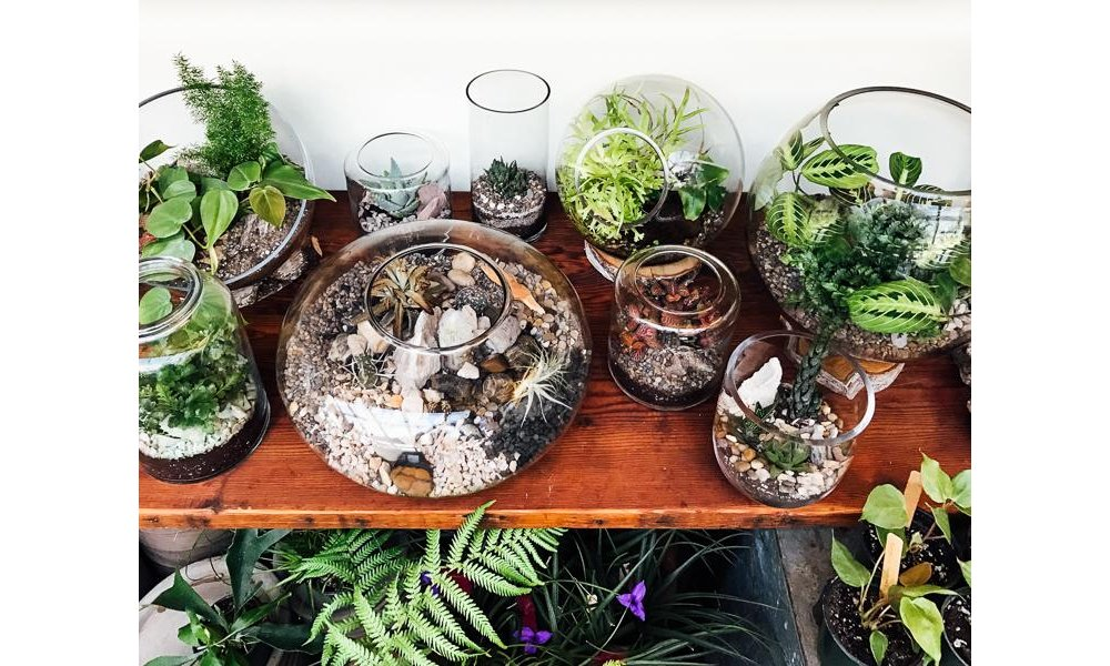 DIY Terrarium: A Touch of Green To Your Microapartment