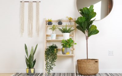 Small Apartment DIY: Minimalist Ladder Plant Stand