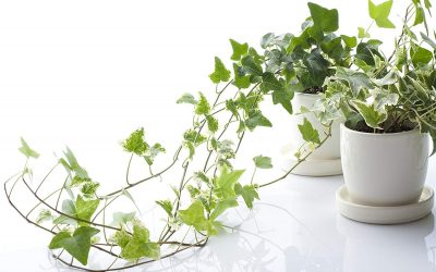 Small Apartment Idea: Dress Your Space with These Air Purifying Plants