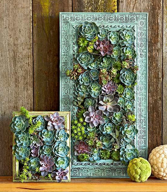 Small Apartment Diy Succulent Wall Garden By Bhg Spaceoptimized